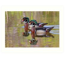 Twin Beaks - Wood Ducks Art Print
