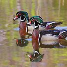 Twin Beaks - Wood Ducks by Jim Cumming