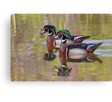 Twin Beaks - Wood Ducks Canvas Print
