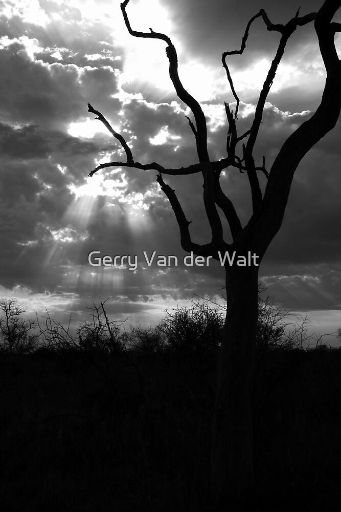Dramatic Tree Landscape - B&W by Gerry Van der Walt