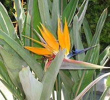 Bird of Paradise Plant by Ann Palmieri