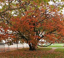 Fall at the Jardin des Plantes by Segalili