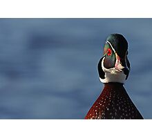 Morning Wood - Wood Duck Photographic Print