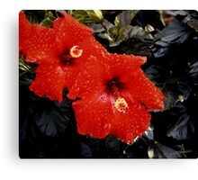 Color me Red Canvas Print