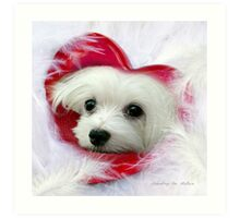 Snowdrop the Maltese - Forever in my Heart Art Print