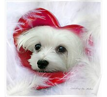 Snowdrop the Maltese - Forever in my Heart Poster