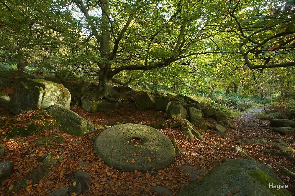 Millstone Wood by Haysie