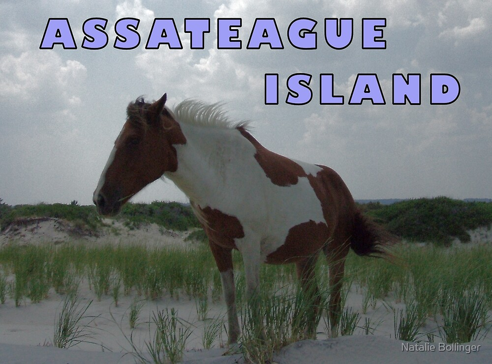 Assateague Card by MidnightAkita