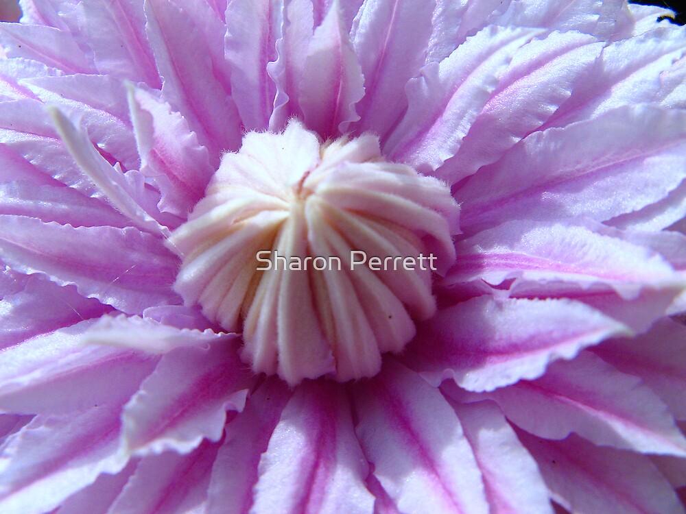 Beautiful Star......... by Sharon Perrett