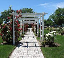Arbor...Luby Park Rose Garden, Caldwell, Idaho by trueblvr