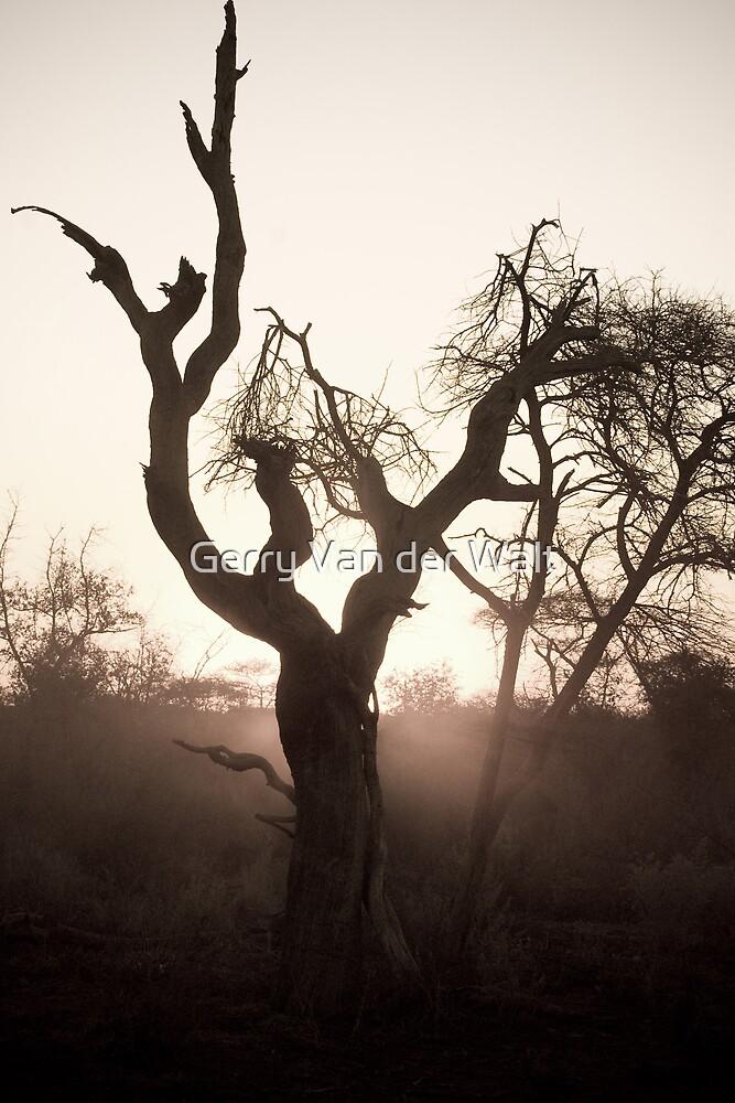 Dusty Tree by Gerry Van der Walt