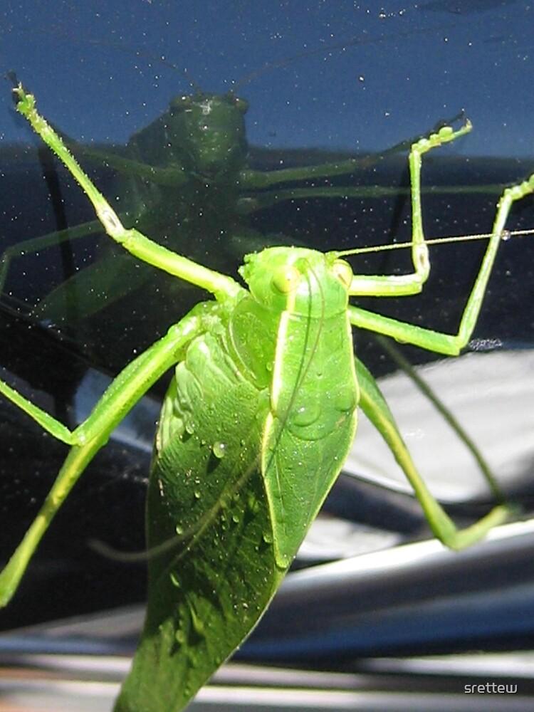 Adult Leaf Bug by srettew