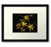 A Sunlit Patch Framed Print