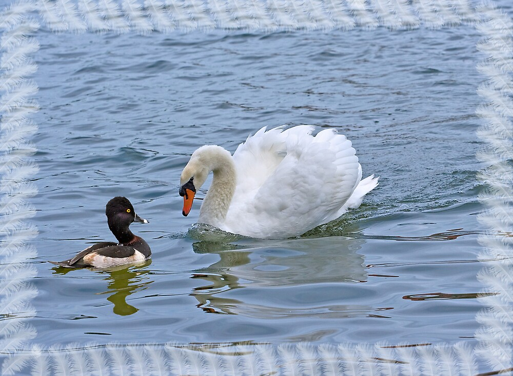 Ring-necked Duck and Mute Swan Greeting Card by Delores Knowles