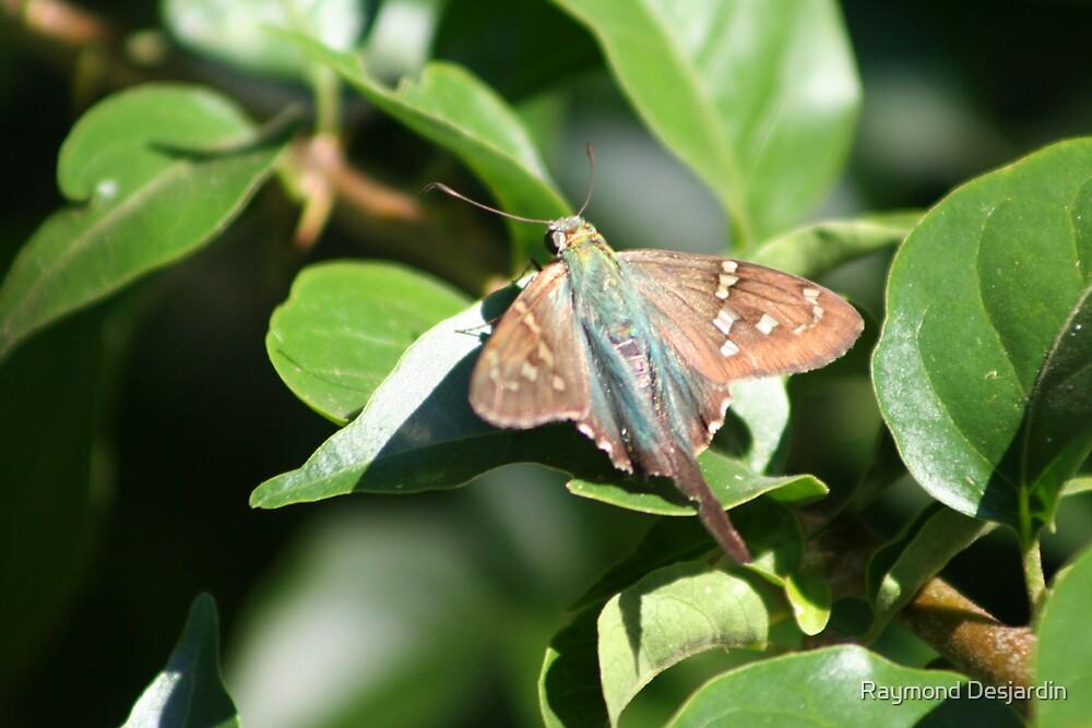 moth by Raymond Desjardin