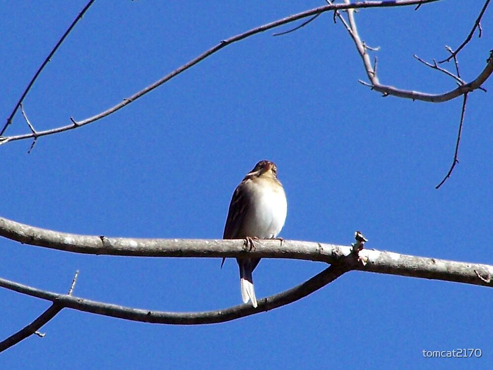 fat lil birdee by tomcat2170