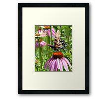 papillon sur la fleur Framed Print