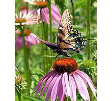 papillon sur la fleur Photographic Print