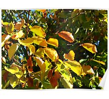 Sunlit Leaves of Russet and Green Poster