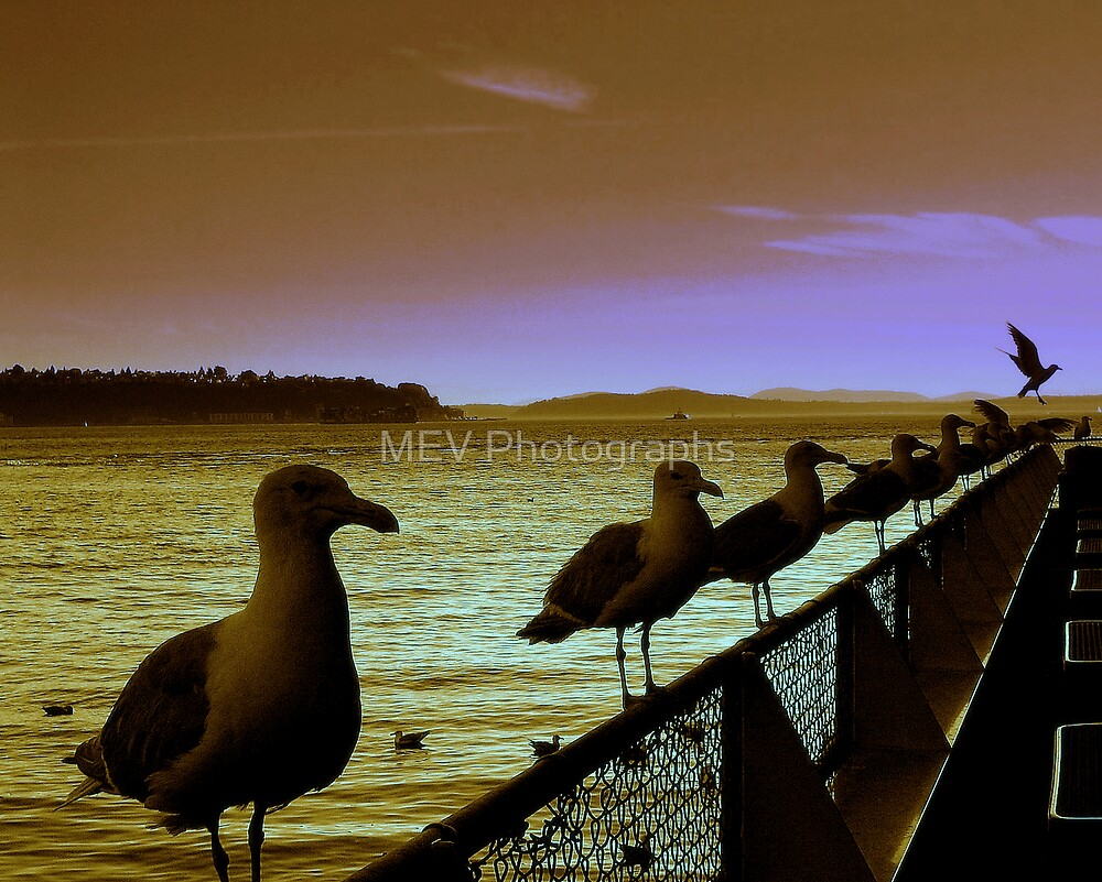 Line-up by MEV Photographs