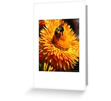 Busy Busy Bee Greeting Card