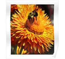 Busy Busy Bee Poster