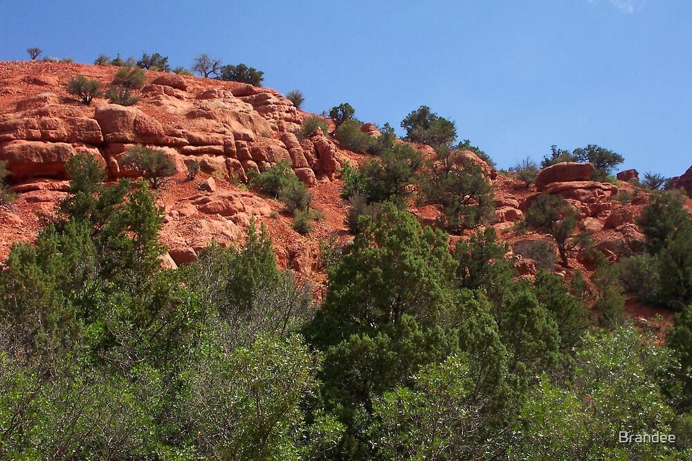 Scenery in Southern Utah by Brandee