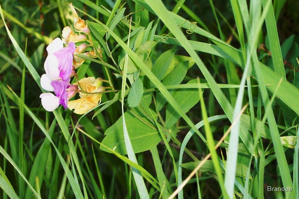 Little purple flower by Brandee
