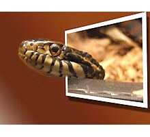 SLITHER Photographic Print