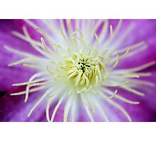 Flower Macro Photographic Print