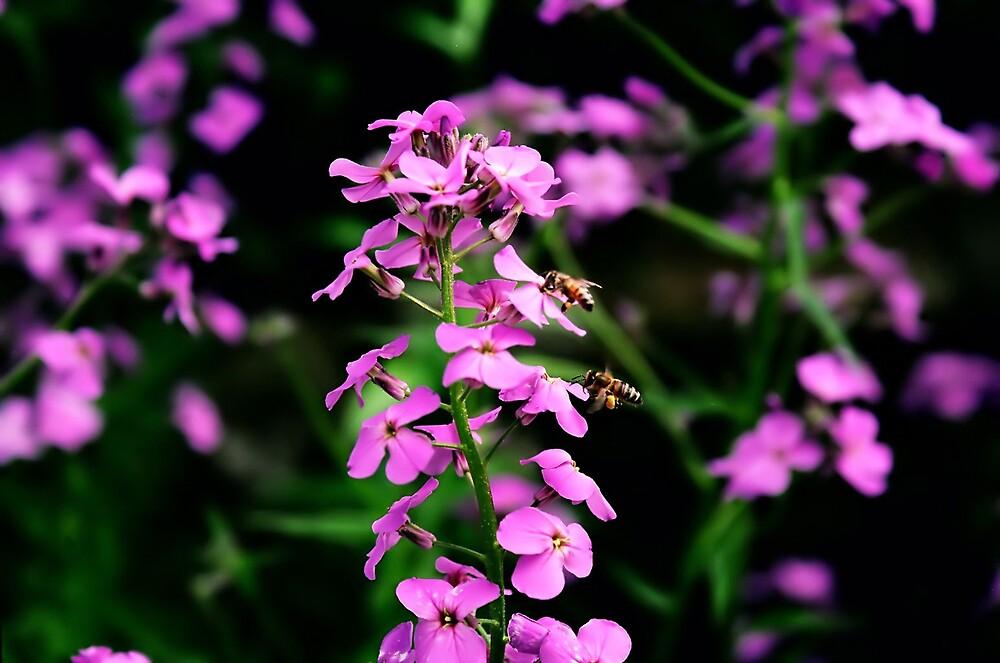 Bee Flower by Kimberly Sharpe