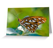 Agraulis Vanillae,Gulf Fritillary Butterfly Greeting Card