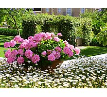 A Pot Of Pink Perfection..........................Mallorca Photographic Print