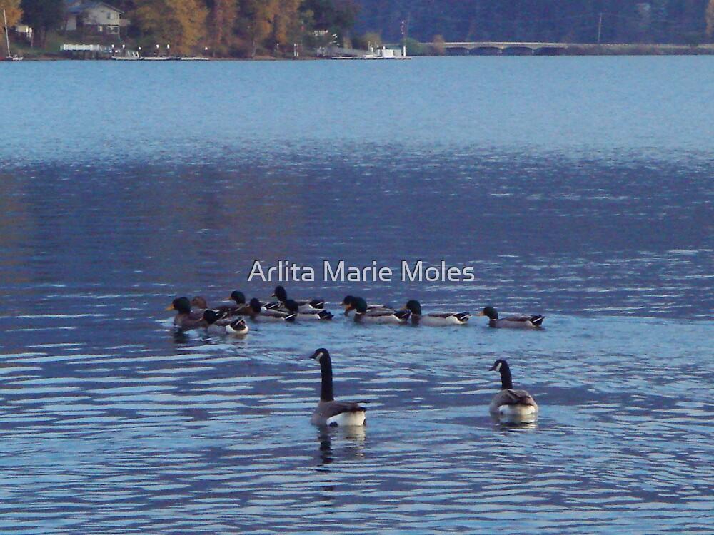 Water Play by Arlita Marie Moles