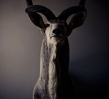 Deer by David Johnson