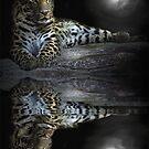 Moonlight Cat by Cheri  McEachin
