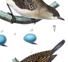 Thrushes With Eggs Sticker