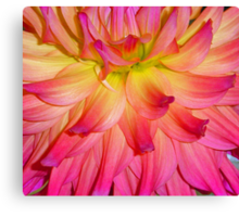 Purple-ish Petals Canvas Print