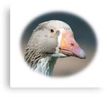 Domestic Goose / Pommersche Gans Canvas Print