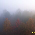 Foggy October Morn by olehippy13