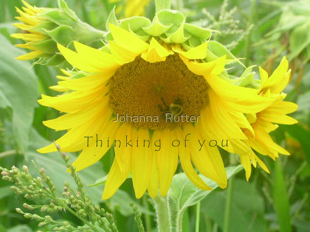 thinking of you flower by Johanna  Rutter
