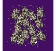 Beautiful Bedazzled Stink Bugs Photographic Print