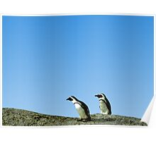 Pair of African Penguins, Boulder Beach, South Africa Poster