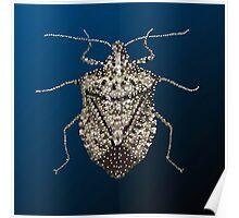 The Wonderful Dazzling Stink Bug Poster