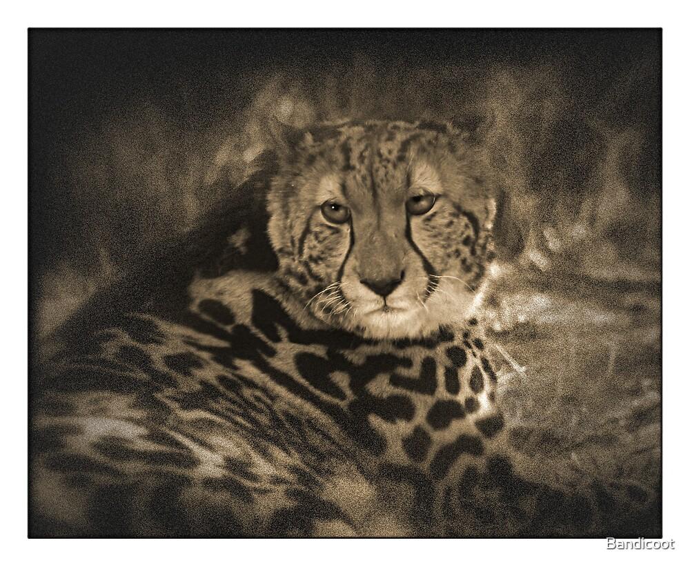 Cheetah Sepia by Bandicoot