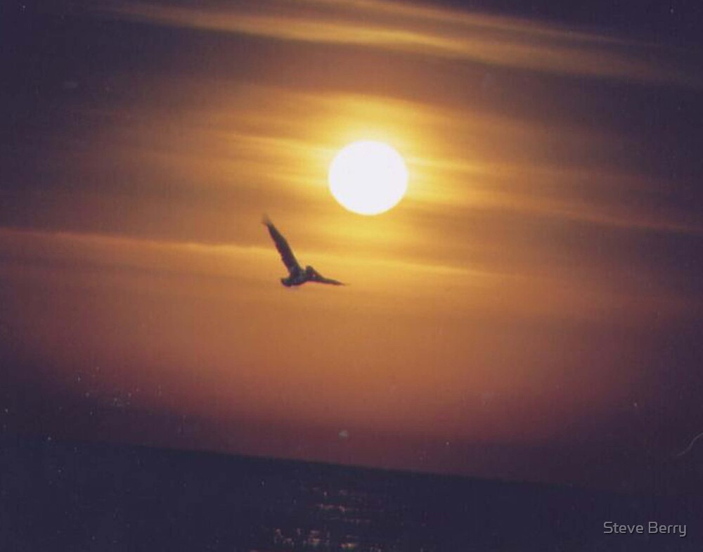 Bird Flying by Steve Berry