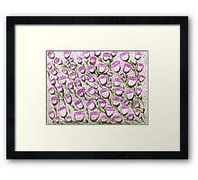 many cupped roses  Framed Print