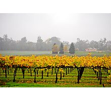 Winery Mist Photographic Print
