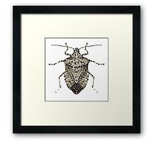 One Beautifully Bedazzled Stink Bug Framed Print