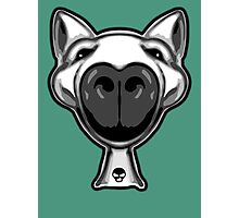 English Bull Terrier Hello Photographic Print